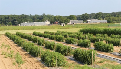 Thriving crops on the white, sandy soils at the Long Island Horticultural Research and Extension Center
