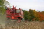 Soybean harvest at Musgrave Research Farm
