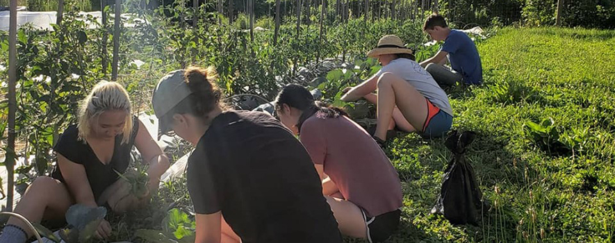 Students are tending crops at a Dilmun Hill Work Party