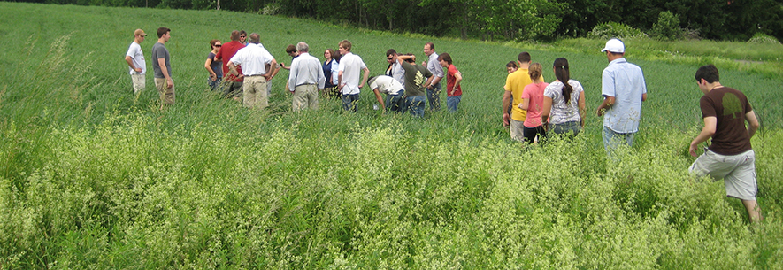 Farmers and researchers learn about new forage varieties