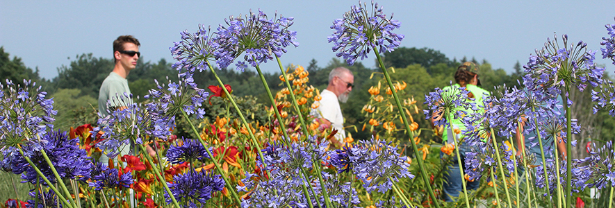 Visitors admiring flowers in full bloom at the Bluegrass Lane Turf & Landscape Research Center