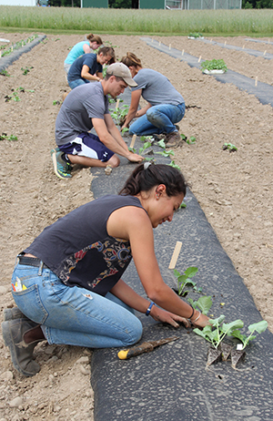 Students are planting different kale varieties at Thompson Research Farm