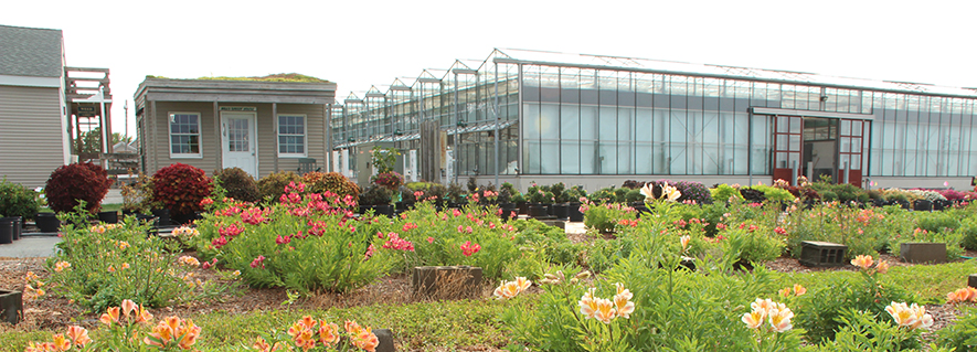Horticultural research in front of the greenhouses at LIHREC