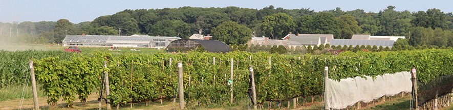 Viticulture at the Long Island Horticultural Research and Extension Center