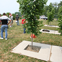 Research by the Urban Horticulture Institute at Bluegrass Lane