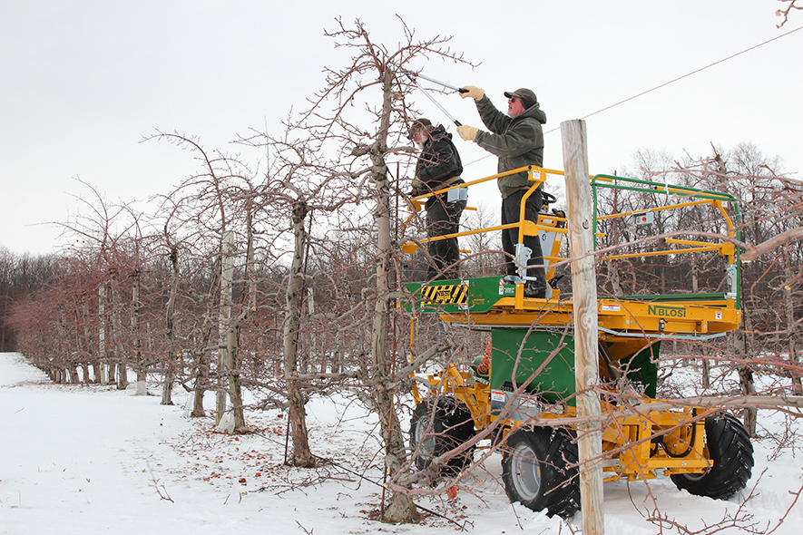 Pruning apple trees from a pruning platform