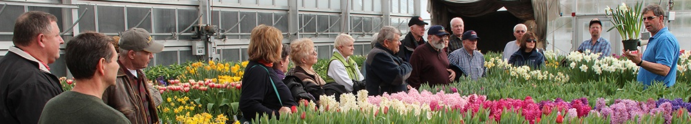 Bulb research at the Cornell greenhouses