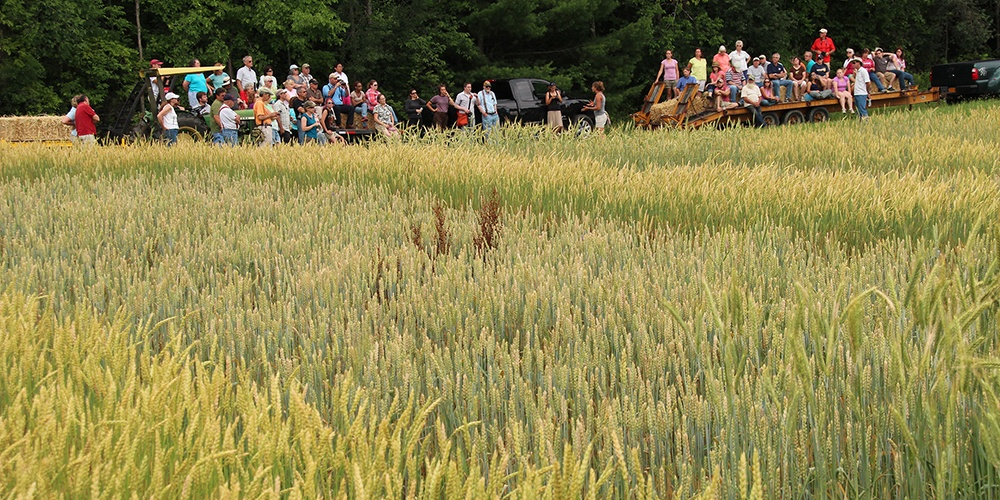 Research of ancient grain varieties at Willsboro Farm draws attention
