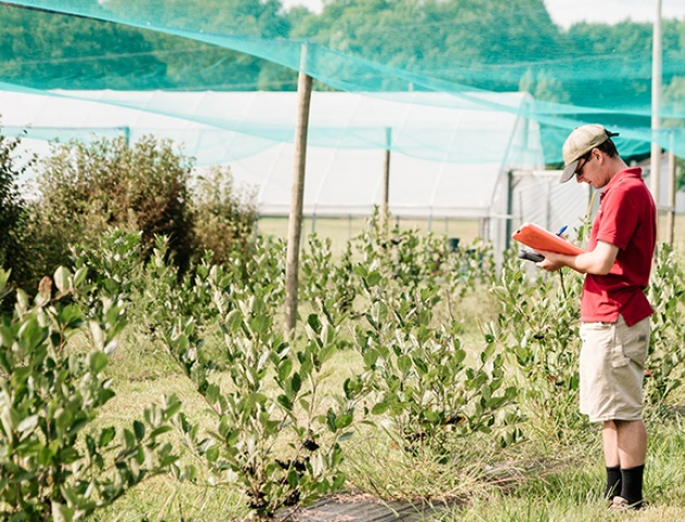 Juneberry research trials at Willsboro Research Farm are protected with bird nets