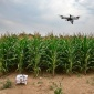 Drone capturing video of corn field at Musgrave Research Farm