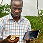 Alfred Ozimati, Ph.D. '18, conducts cassava field tests at the National Crops Resources Research Institute in Namulonge, Uganda.