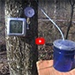 Tools for maple sap collection