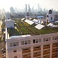 Roof top farming in New York City