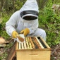 A Beemmunity employee, Abraham McCauley, applies a pollen patty containing microsponges to a hive as part of colony trials